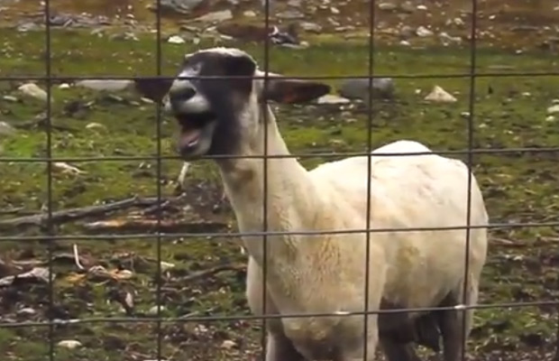 February News Bloopers – Singing goats -Dating on Demand