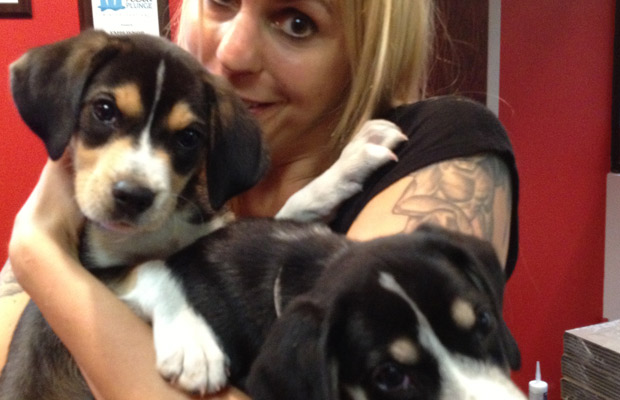 Watch Shelley's Puppies and Meet Bo and Luke