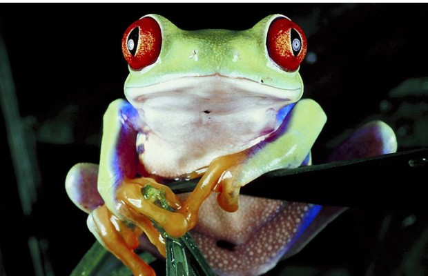 7 year dispute ends in massive frog breeding ground