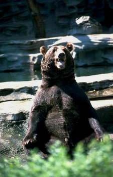 Exploding Boobs, Wild Bear Gets into Zoo and Gender Confussion