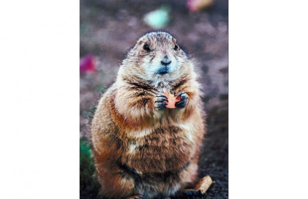 A Mother and Son steal 5,000 Gopher Feet