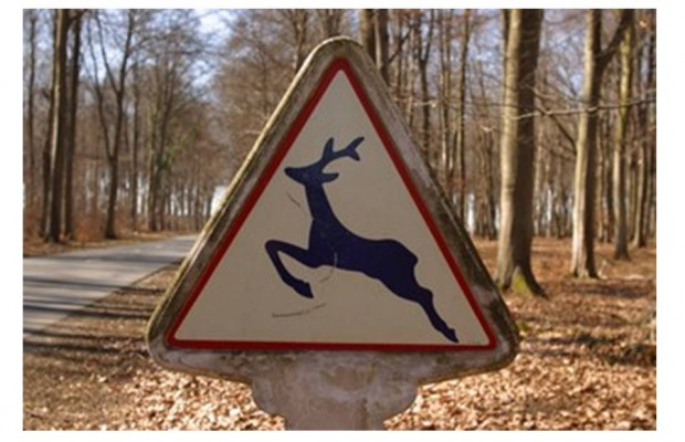 Jogger hit by Flying Deer
