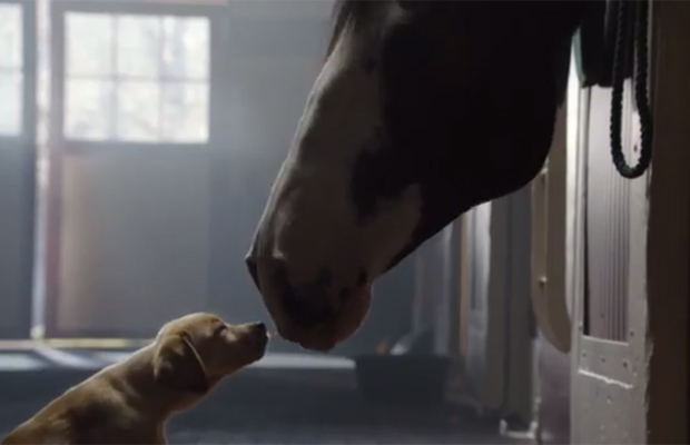Video: Budweiser Super Bowl Commercial