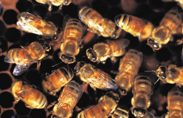 Would-be Thieves break into a Bee Hive