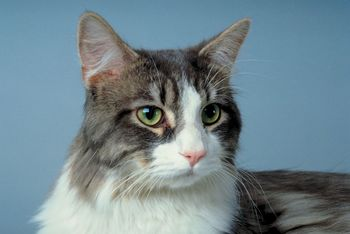 Another Family calls 911 after being attacked by their Cat