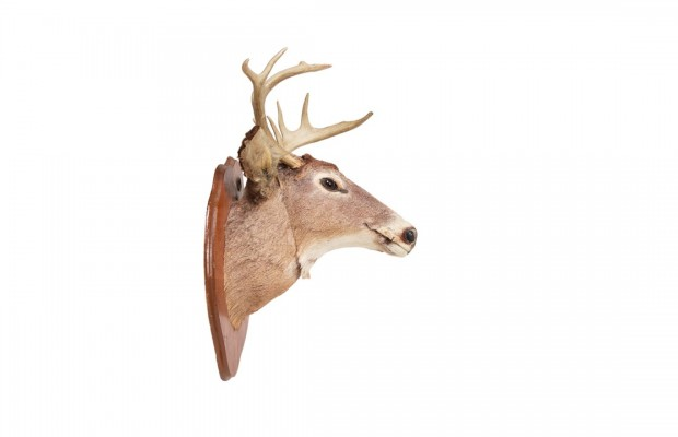 A Couple of Women Fight Each Other with Deer Heads